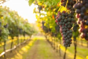GUIDE TO THE BEST WINERIES IN ORANGE COUNTY, CA